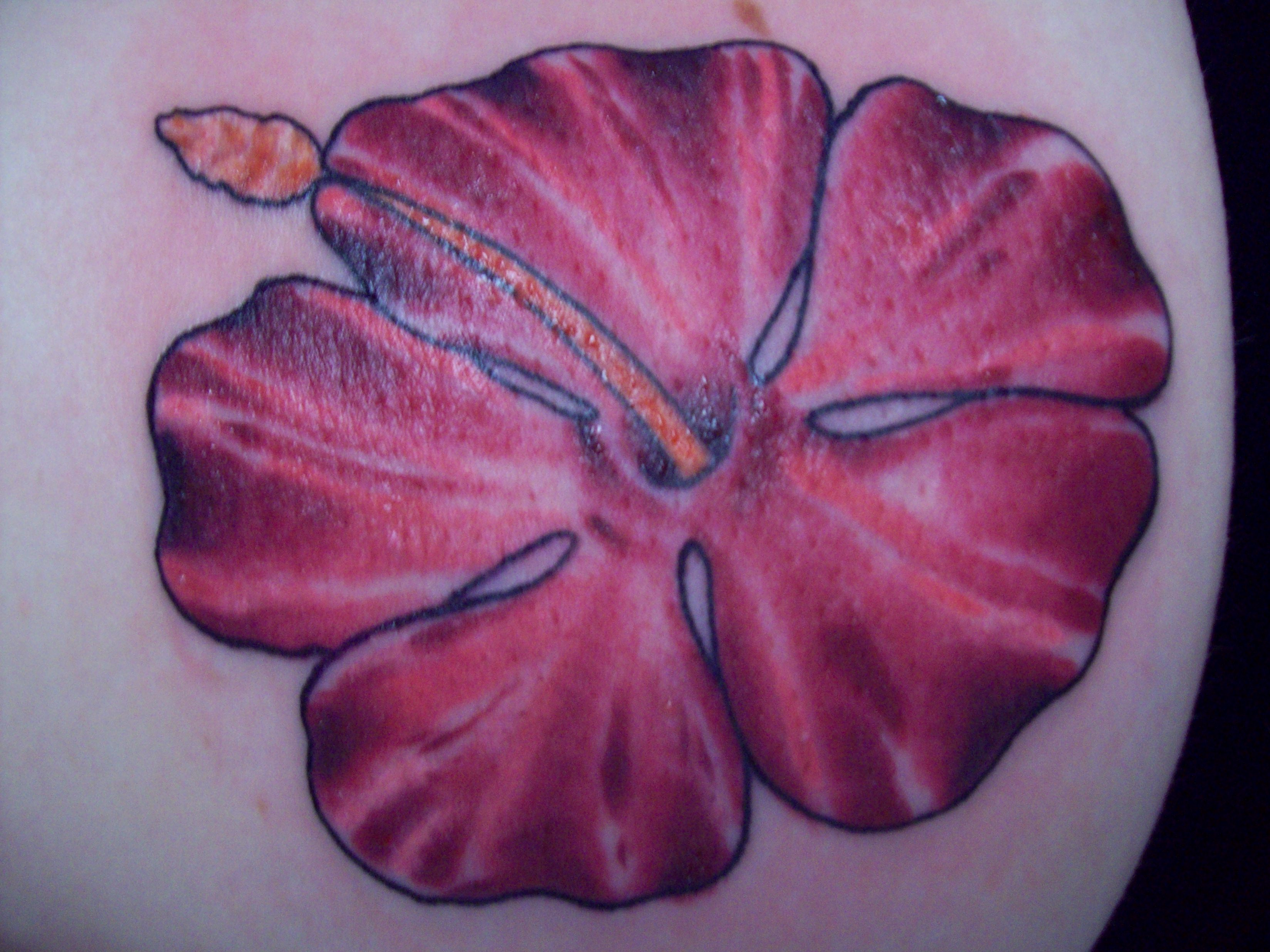 Pin tattoo gainesville tattoos parlors artists shops on for Tattoo shops in ocala